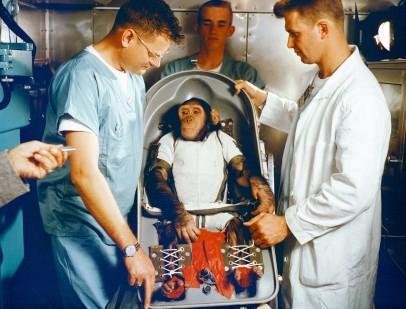 """Le chimpanzé """"HAM""""lancé le 31 janvier 1961"""